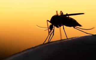 how do you get malaria, what are the symptoms of malaria and is malaria contagious?